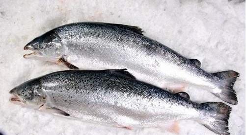 三文鱼会传染埃博拉?